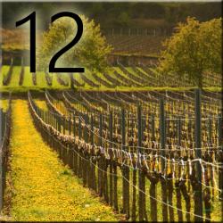 Balade vigneronne